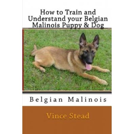 How to Train and Understand Your Belgian Malinois Puppy & Dog Belgian Malinois German Shepherd