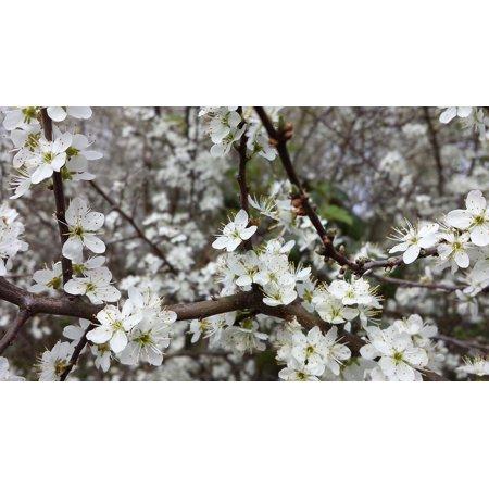 Framed Art For Your Wall Flowers Fruit Tree Easter Apple Beginning Spring 10x13 Frame - Easter Fruit
