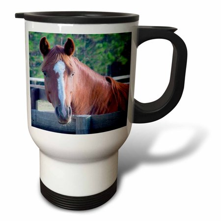 3dRose Quarter Horse Mare, Travel Mug, 14oz, Stainless Steel