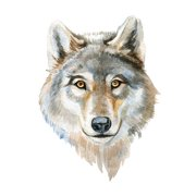 Wolf Home Wall Shelf Decor Animal Decorations Watercolor Square Sign - 9x9