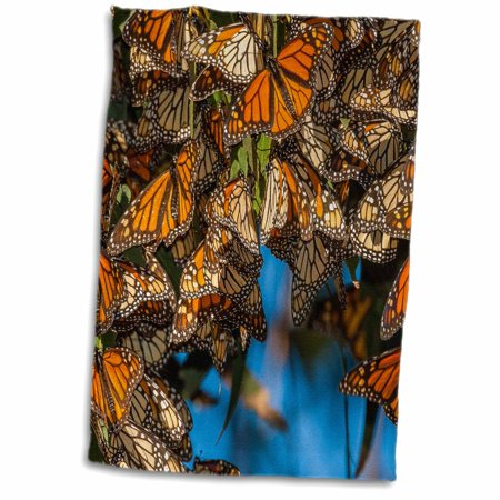 3dRose USA, California, Pismo Beach. Migrating monarch butterflies. - Towel, 15 by (Billabong Migrate Towel)