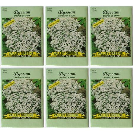 Valley Greene (6 Pack) 2 gram/Package Sunflower Giant Gray Stripe Heirloom Variety Seeds