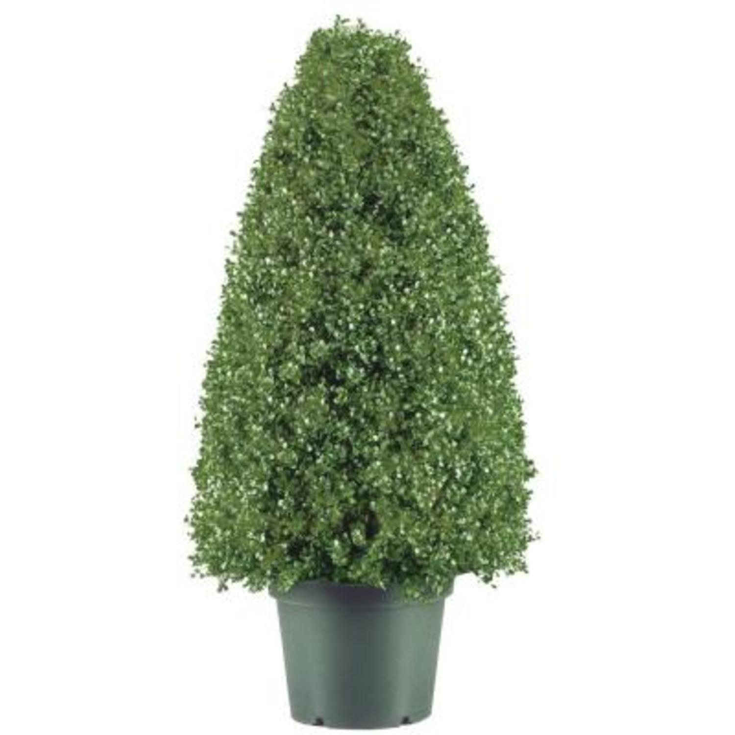 "30"" Potted Artificial Boxwood Topiary Tree"