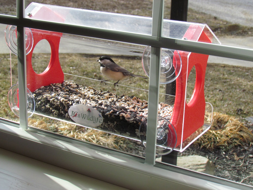 Window Birdfeeder by JCs Wildlife Holds 4 Cups Red Recycled Poly Free Shipping by JCs Wildlife