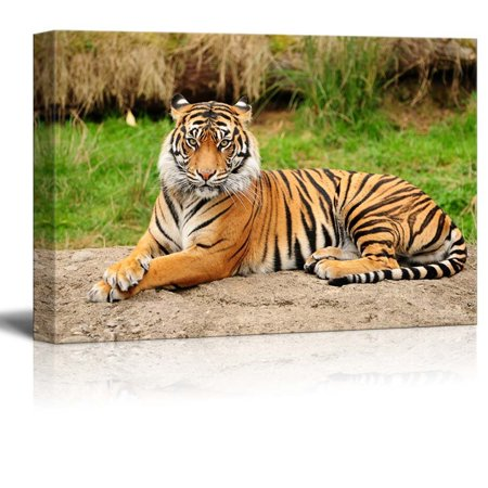 Canvas Prints Wall Art - A Royal Bengal Tiger in The Wild | Modern Wall Decor/Home Decoration Stretched Gallery Canvas Wrap Giclee Print & Ready to Hang - 12