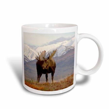 3dRose Moose bull wildlife, Denali National Park, Alaska - US02 SKA3065 - Steve Kazlowski, Ceramic Mug, 11-ounce