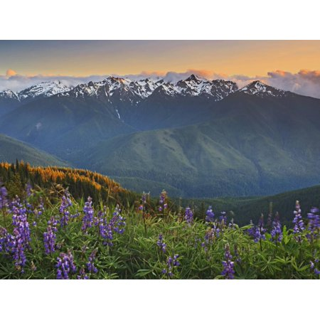 Schmid Memories (Early Summer Storm Clears the View of the Olympic Mountains, with Lupine Wildflowers Print Wall Art By Geoffrey Schmid)