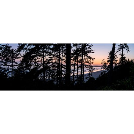 Sitka Spruce trees on Long Beach at sunset Pacific Rim National Park Reserve Vancouver Island British Columbia Canada Poster Print by Panoramic - Halloween Theme Park Long Island