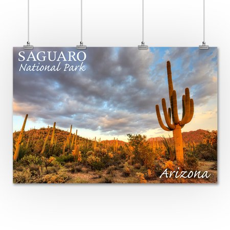 Saguaro National Park, Arizona - Day Scene - Lantern Press Photography (36x54 Giclee Gallery Print, Wall Decor Travel Poster)