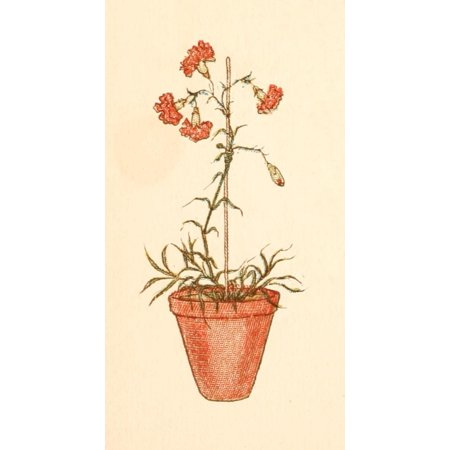 Language Of Flowers 1884 Carnation Pot Stretched Canvas Kate Greenaway 18 X 24