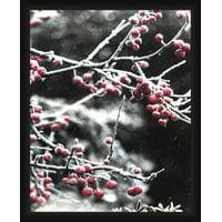 PTM Images,Cherry Tree