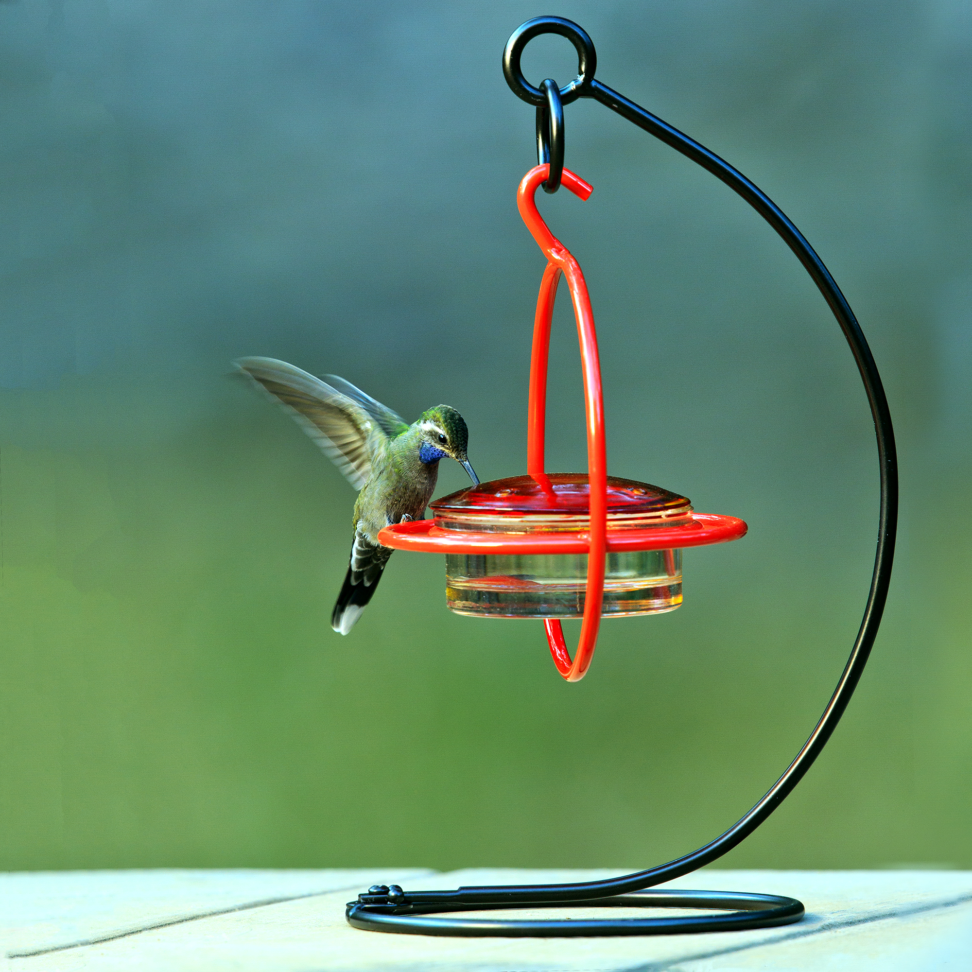 Couronne Tabletop Bird Feeder Stand Image 3 Of 3