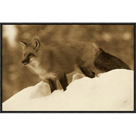 Global Gallery Red Fox Standing At The Top Of A Snow Bank  Montana By Tim Fitzharris Framed Photographic Print On Canvas