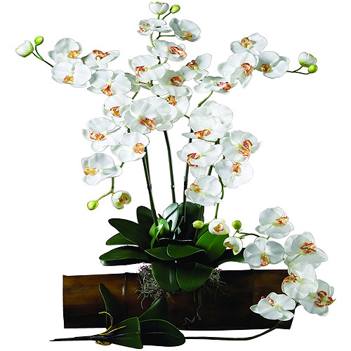 Phalaenopsis Stem, Cream, 12pc