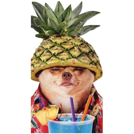 Avanti Press Pineapple Poolside Chihuahua Oversized Funny Dog Masculine Birthday Card](Poolside Decorations)