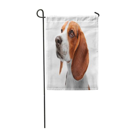 SIDONKU Brown Beautiful Beagle Dog White Hound Adorable Canine Garden Flag Decorative Flag House Banner 12x18 - Adorable Garden