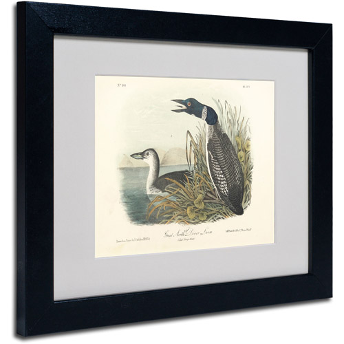 "Trademark Fine Art ""Great North Diver Loon"" Canvas Art by John James Audubon, Black Frame"
