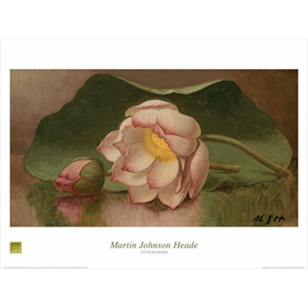 - Lotus Blossom 1885-95 by Mart Johnson Heade 24x32 Art Print Poster Famous Painting Floral Still Life Pink Flower