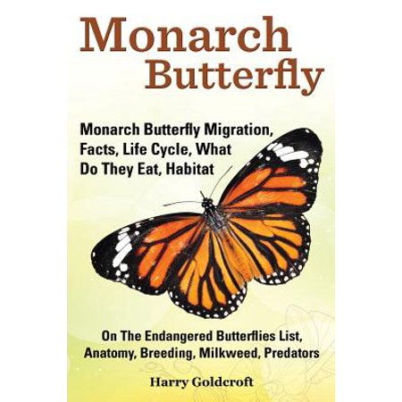 Monarch Butterfly, Monarch Butterfly Migration, Facts, Life Cycle, What Do They Eat, Habitat, Anatomy, Breeding, Milkweed, (Best Milkweed For Monarchs)