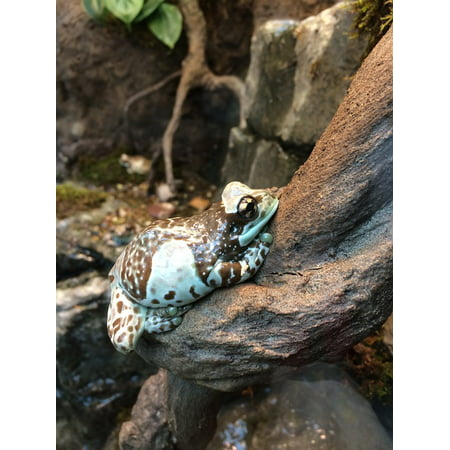 Laminated Poster Frog Colorful Green Exotic Speckled Amphibian Poster Print 11 x 17