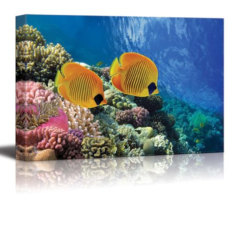 Wall26 - Canvas Prints Wall Art - Coral Reef and Tropical Fish in Sunlight | Modern Wall Decor/ Home Decoration Stretched Gallery Canvas Wrap Giclee Print. Ready to Hang - 32