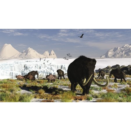 Wooly Rhino - Woolly mammoths and woolly rhinos in a prehistoric landscape Stretched Canvas - Arthur DoretyStocktrek Images (19 x 11)