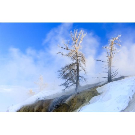 Early Morning mist around trees. Yellowstone National Park. Wyoming. Print Wall Art By Tom Norring