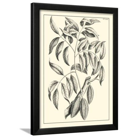 Non-Embellished Antique Foliage III Framed Print Wall Art