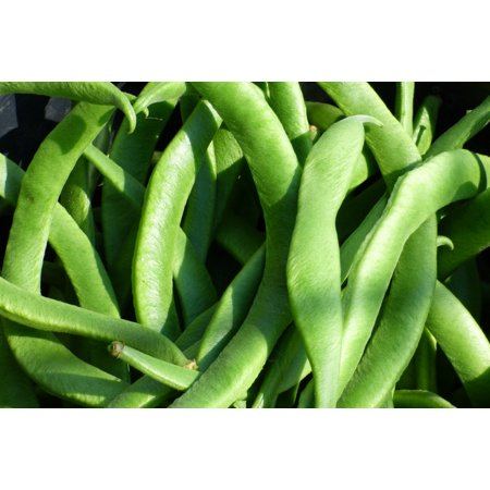 White Half Runner Green Bean 75 Seeds Garden Vegetable Pole type produces high yields gourmet beans Freezing canning or