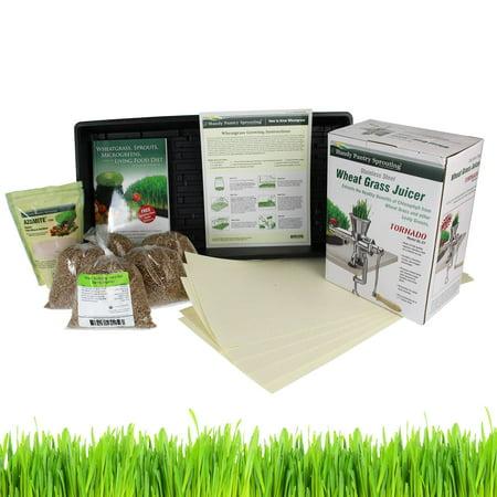 Hydroponic Organic Wheatgrass Growing Kit + Tornado (AKA: Back to Basics) Stainless Steel Manual Wheat Grass