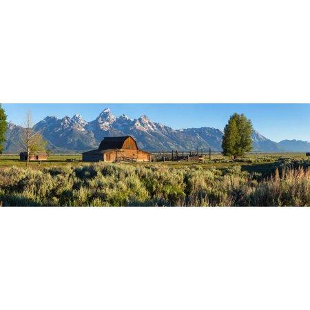 T. A. Moulton Barn in field, Mormon Row, Grand Teton National Park, Wyoming, USA Print Wall