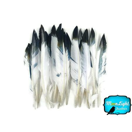 1/4 Lbs - Black Tipped White Duck Pointer Wholesale Feathers (Bulk) - White Feathers Bulk