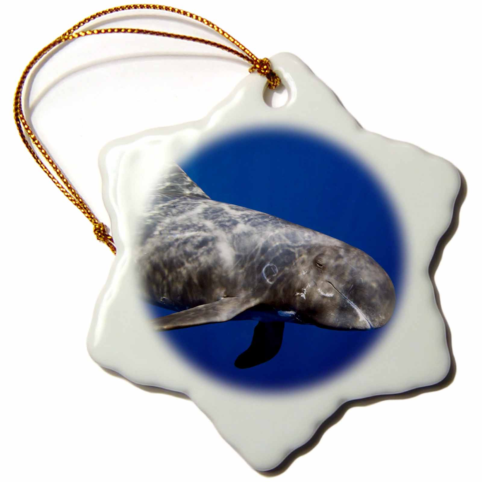 3dRose Pygmy killer whale, Feresa attenuata, also known as slender blackfish or slender pilot whale, Hawaii, Snowflake Ornament, Porcelain, 3-inch