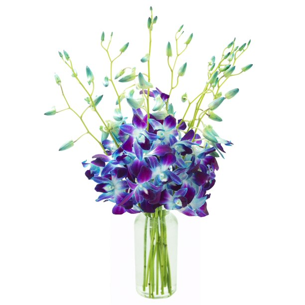Kabloom Mother S Day Collection Exotic Sapphire Orchid Bouquet Of Blue Orchids From Thailand With Vase Walmart Com Walmart Com