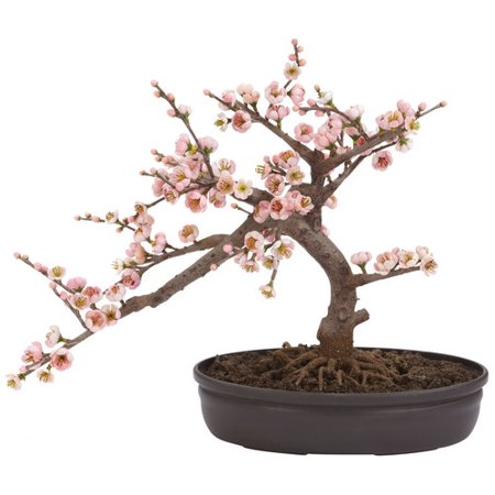 Cherry Blossom Bonsai Silk Tree A truly beautiful specimen symbolizing the botanical beauty of Japan (and other parts of the world as well). Staying low to the ground at 15 inches, this Cherry Blossom Bonsai is perfect for those seeking elegance and tranquility. The varied pastel colors bring a sense of piece to all who behold its splendor, and since its maintenance free in its own decorative pot, you never have to worry about the painstaking upkeep needed with other bonsai.SpecificationsHeight: 15 In.Width: 17.5 In.Depth: 10 In.Pot Size: W: 11 in, H: 2.5 in, D: 6.5 in