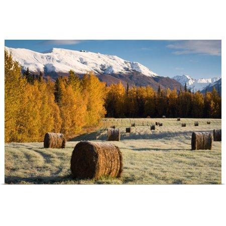 Hay Bail (Great BIG Canvas | Rolled Poster Print entitled Frost clings to bails of hay in a field near Palmer, Alaska on an early Autumn)