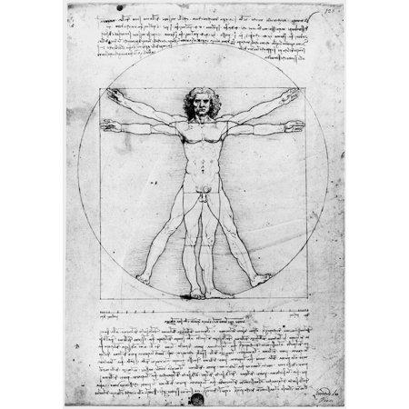 Leonardo Anatomy Nproportions Of The Human Figure Or The Vitruvian ...