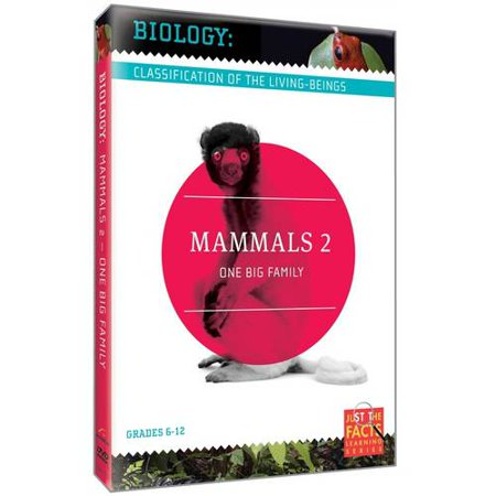 Biology: Classification Of The Living-Beings - Mammals, Vol. 2: One Big Family
