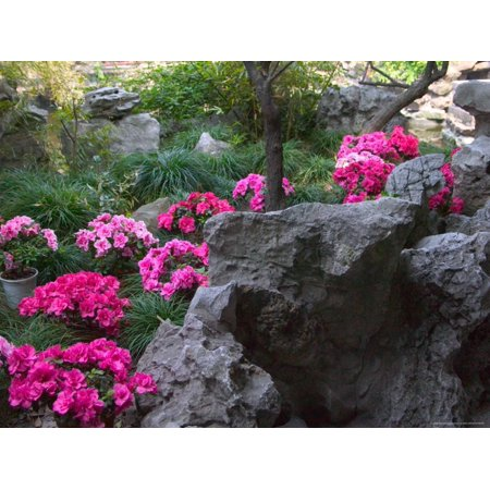 Traditional Rock (Flowers and Rocks in Traditional Chinese Garden, China Print Wall Art By Keren Su )