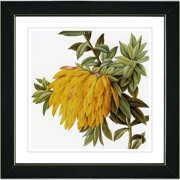 Studio Works Modern Vintage Botanical No. 44W by Zhee Singer Framed Painting Print