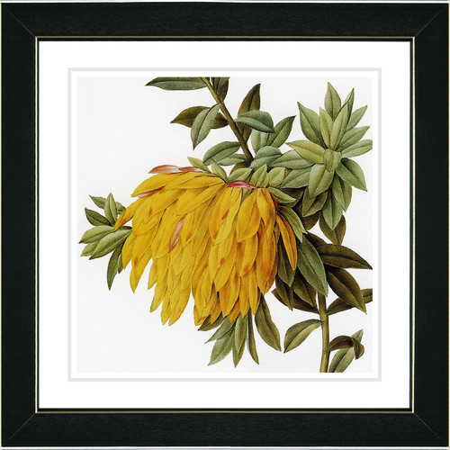 Studio Works Modern Vintage Botanical No. 44W by Zhee Singer Framed Painting Print