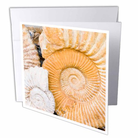 3dRose Ammonite fossils for sale in the souk, Medina, Marrakech, Morocco, Greeting Cards, 6 x 6 inches, set of 12