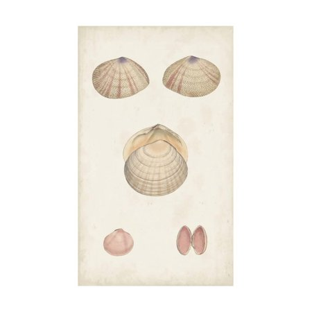 Antiquarian Shell Study V Print Wall Art By Vision Studio