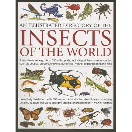 An Illustrated Directory of the Insects of the World : A Visual Reference Guide to 650 Arthropods, Including All the Common Insect Species Such as Beetles, Spiders, Butterflies, Moths, Grasshoppers and Flies