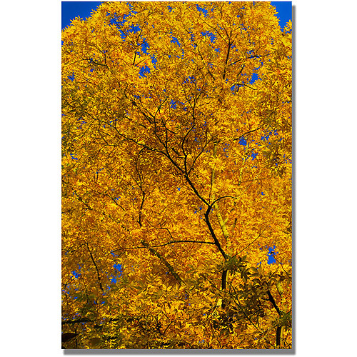 "Trademark Art ""Golden Trees"" Canvas Wall Art by CATeyes"