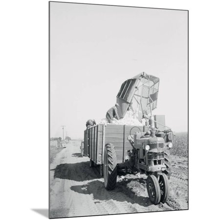 A Cotton Picker Unloading its Contents into a Truck Wood Mounted Print Wall  Art