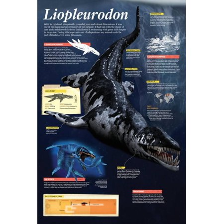 Infographic of the Liopleurodon, One of the Main Marine Predators of the Jurassic Poster Wall Art