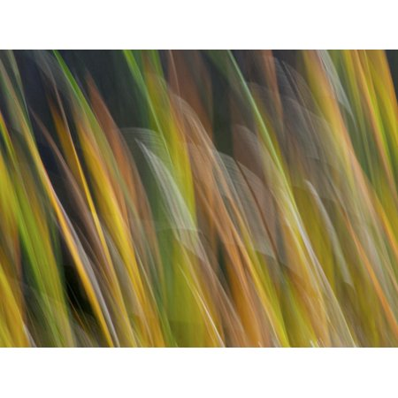 Motion Blur of Grasses Along a Canal at Lake Mattamuskeet Near Engelhard, North Carolina Print Wall Art By Melissa