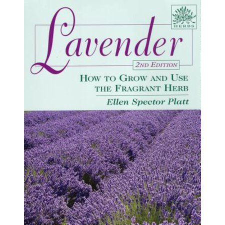 Lavender : How to Grow and Use the Fragrant Herb (Best Place To Grow Lavender)