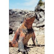 Marine Iguana on Galapagos Island Journal: 150 Page Lined Notebook/Diary